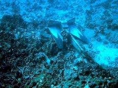 下锚损坏珊瑚礁 支付和解费10万美元